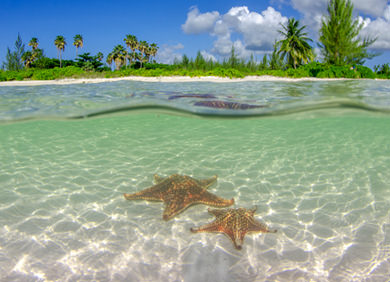 Visit tranquil Starfish Point