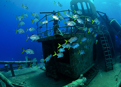 Dive Or Snorkel On Kittiwake Wreck