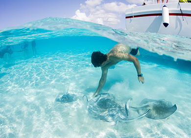Feed And Swim With Stingrays